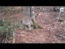 Дерево в лесу , или звериная тропа