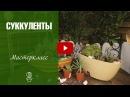 дом раст=Композиция из суккулентов и кактусов ✅ Мастер класс Хитсад