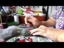 Как я делаю снегирей на рукавичках