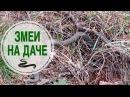 Змеи на даче ⚔ Как избавиться от змей? ⚔ Полезные советы HitsadTV