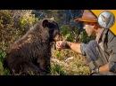 ВСТРЕЧА С МЕДВЕЖОНКОМ.Американский черный медведь (барибал).Brave Wilderness на русском