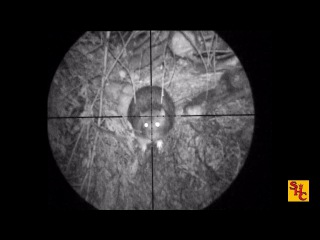 Pest Control with Air Rifles - Rat Shooting - Baracuda Hunter Extreme .177