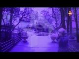 Видео нападения наактивистку «Яблока»