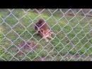 В мире животных