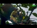 В дебрях Индии 4 серия из 5 - Западные Гаты. Мусонные горы / Wіldеst Іndіа 2012