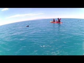 ))) в стае дельфинов напротив Симеиза, Крым 12.06.17