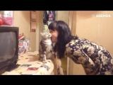 Котишки, любящие обнимашки
