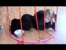 Пантера Кысь из спектакля Один день из жизни зоопарка.