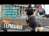 В Германию с собакойОбман при прокате автоWorld Dog ShowChubaka Vlog!