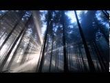 Dark Sanctuary - Royaume M