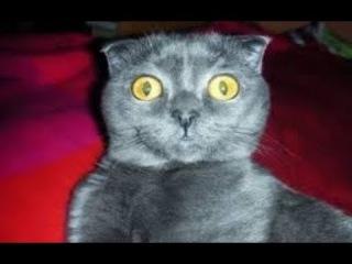 Самые смешные кошки для детей видео Приколы с животными и котами 2018 #7 (Классное Без монтажа)