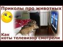 Приколы про животных. Как коты телевизор смотрели. Fun with animals.
