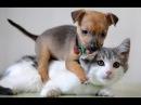 Лучшие приколы про собак и кошек Подборка видео приколов про милых котиков и со...
