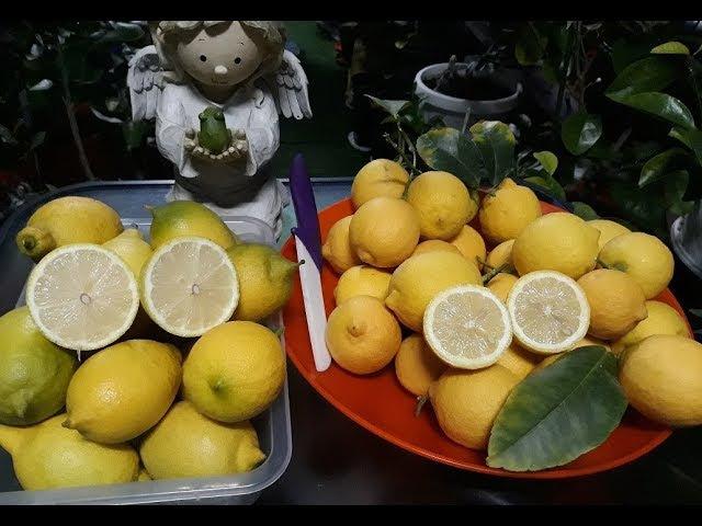 Limon Lunario. Лимон Siracusano.