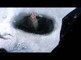 Рыбалка в последний день зимы. Мороз -15, ветер. Калининград, Куршский залив. Лещ, плотва.