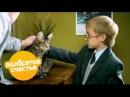 Полосатое счастье. 4 - 6 серии | Комедийный сериал для детей и взрослых