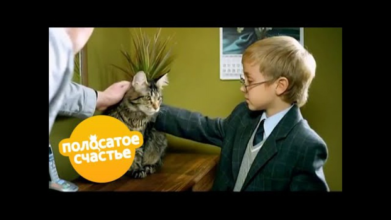 Полосатое счастье 4 6 серии Комедийный сериал для детей и взрослых