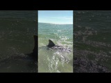 Land BAsed SHark Fishing BIG OLE Bull