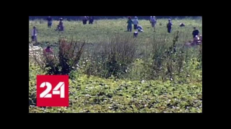 Пайщики совхоза имени Ленина Грудинин забрал нашу землю Россия 24