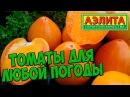 Семена томатов 🍅 Томаты которые вырастут в любую погоду 🍅 Агрофирма АЭЛИТА обзор