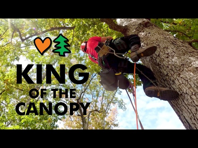 World's Greatest Tree Climbers Compete Head To Head