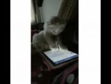кот, ну и гад же ты :)