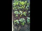 Когда на улице сургобы... уральские садоводы устали ждать весну. ..