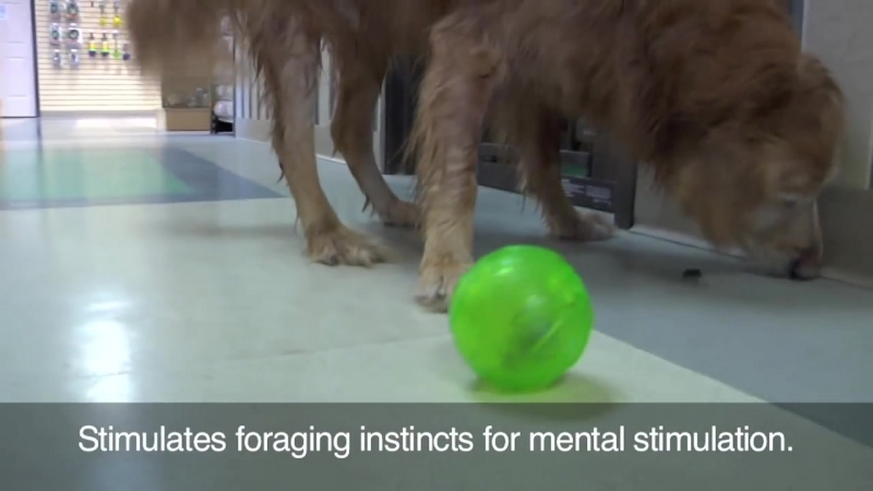 Treat Dispensing Chew Ball HD
