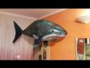 Акула в доме 🖒