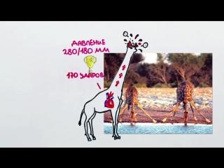 134. Как жирафы помогли космонавтам слетать в космос — Научпок