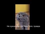 кошка говорит с хозяином на русском языке(голова у меня болит)