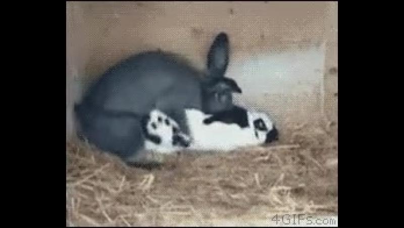 Ох уж эти кролики...