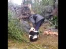 Панда помогает смотрителю