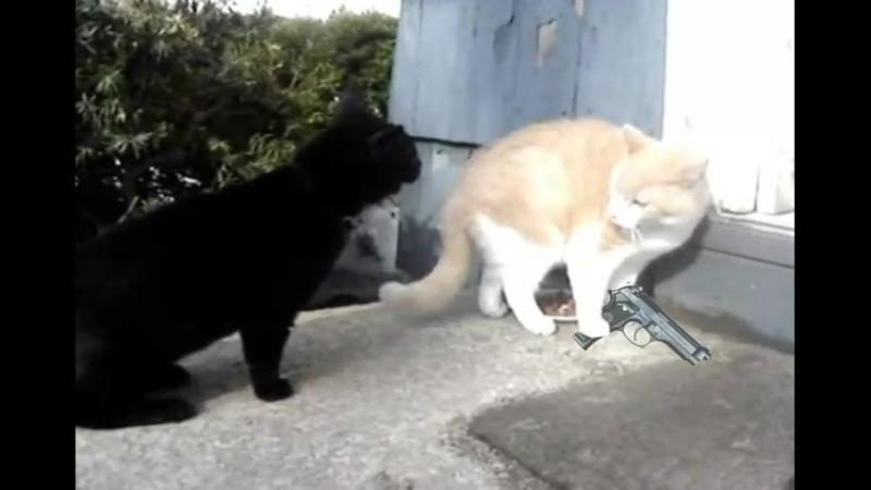 Разборка котов на районе: -