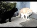 Разборка котов на районе - Опа опа у него волына, держись валера, пацаныы!
