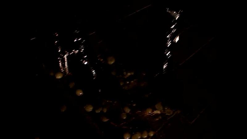 давлю виноград шпильками