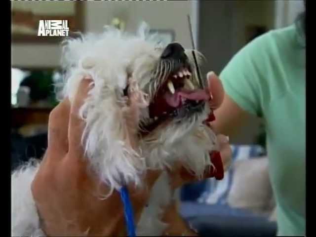 Переводчик с собачьего (сезон 1 серия 23 из 26 2004)