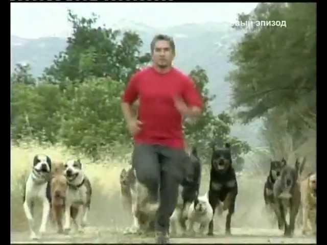 Переводчик с собачьего (сезон 1 серия 24 из 26 2004)