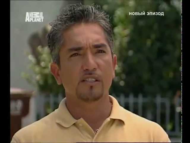 Переводчик с собачьего (сезон 1 серия 16 из 26 2004)