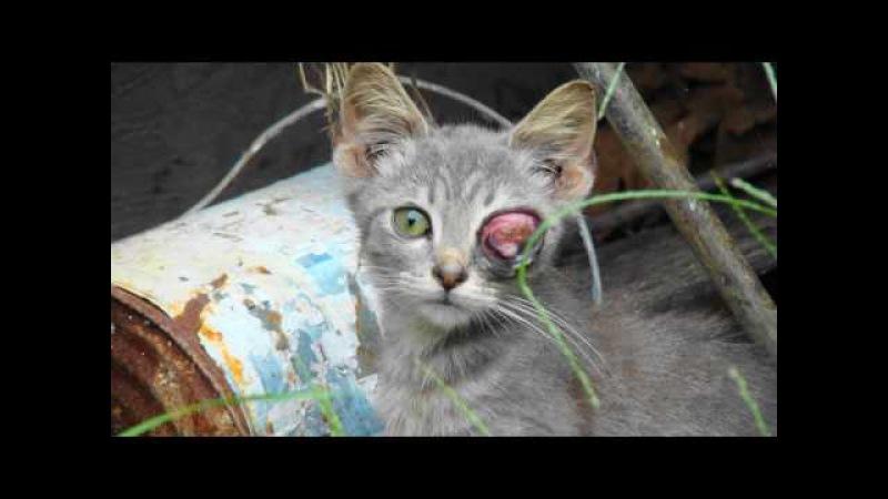 Trap Neuter Release It's Cruelty to Animals