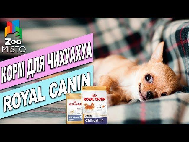 Корм для собак Роял Канин Чихуахуа| Обзор Корма Роял Канин | Royal Canin Chihuahua review