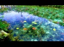 Monet's Pond Seki City Japan