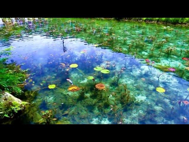Monets Pond, Seki City, Japan.