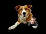 Панин с собачкой (друг собаки)