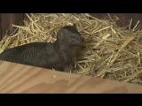 Из Чехии в Экопарк приехали африканские мангусты