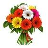 Цветы Чусовой