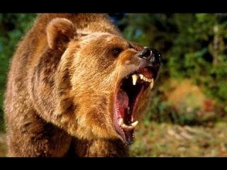 Самые ужасные нападения животных на людей! Самый страшный хищник планеты/Пчелы ...