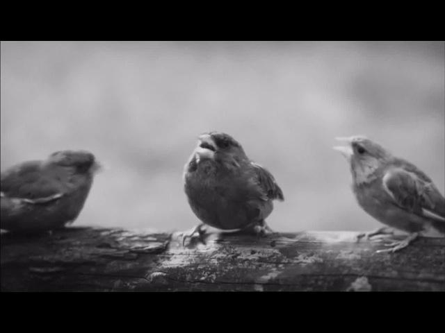 Beatbox Bird