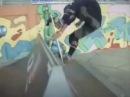 Let's Get PumpRock'd: pumpRockr self-propelled carving cruising trick skateboard