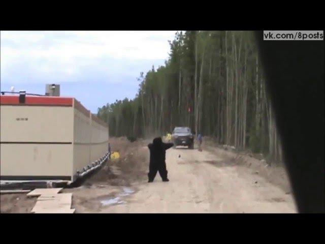 мужик переоделся в медведя